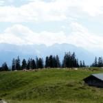 Almenwanderung bei Mittenwald: Kühe, Karwendel und coole Aussicht