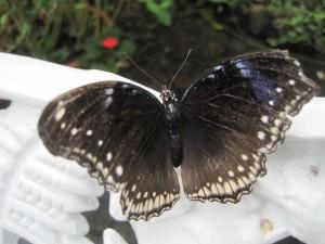 Schmetterlinge gibt es in fast allen Farben. Foto (c) kinderoutdoor.de