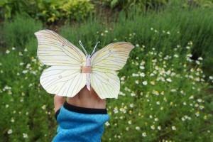 Schon fliegt unser Schmetterling.  Foto (c) kinderoutdoor.de
