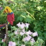 Laubsäge Arbeit: Ein lustiger Gartenpapagei