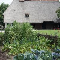 Kerbel gehörte früher zum Speiseplan der Bauern und der Landbevölkerung.   Foto (c) kinderoutdoor.de
