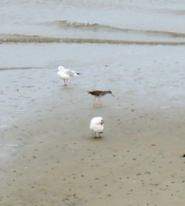 Auf Vogelpirsch solltete Ihr unbedingt gehen, wenn Ihr auf der Lotseninsel in der Schleimündung zeltet. Foto (c) kinderoutdoor.de