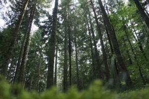 Zelten im Harz umgeben von Bäumen und ein genialer Blick auf den Brocken: Das gibt es bei Harz-camping. Foto (c) kinderoutdoor.de