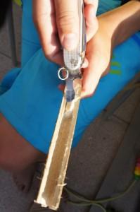 Auskratzen! Mit dem Dosenöffner entfernen wir für unsere Murmelbahn das Mark aus dem Hollunderast.  foto (c) kinderoutdoor.de