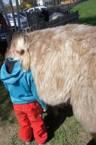 Mit Tiere wandern: Lama Touren im Frankenwald begeistern die Kinder und Erwachsenen.  foto (c) kinderoutdoor.de