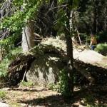 Outdoor Abenteuer für Kinder: Im Wald ein Versteck bauen