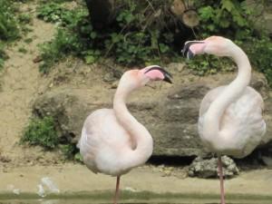 Auf der Flamingoroute kommt Ihr durch das Münsterland und die angrenzenden Niederlande.  Foto (c) kinderoutdoor.de