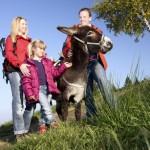 Wandern mit Tieren: Esel und Lamas begeistern die Kinder