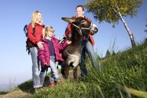 Mit Eseln an der Grenze zu Slowenien entlangwandern. Das gibt es in der Steiermark. Foto  © Steiermark Tourismus, Foto:Harry Schiffer