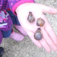 """Aufgaben für die Schnitzeljagd im Wald: Dazu gehören auch diese """"Sprinter"""" beim Schneckenrennen.   foto(c) kinderoutdoor.de"""