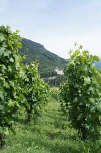 Reben und Reben lassen! In Liechtenstein wächst auch ein guter Tropfen, der zu manchem Rezept aus dem wildwaldwunderbar Kochbuch perfekt passt.  Foto (c) kinderoutdoor.de
