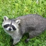 Wildpark in der Stadt: Hirsch, Wildschwein und Luchs anschauen