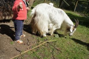 Eine Streichelwiese, wie im Wildpark Hardegsen, kommt bei den Kindern immer gut an.  Foto (c) kinderoutdoor.de