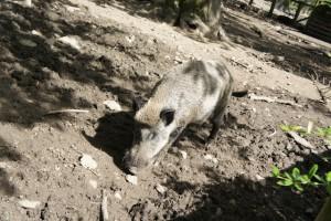 Saustark ist der Wildpark in Düsseldorf. Hier dürfen die Kinder, in Maßen, Wildschweine und Dammwild füttern.  Foto (c) kinderoutdoor.de