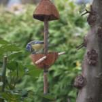 Vogelhäuschen selber bauen: 15 Minuten Zeit und eine Kokosnuss