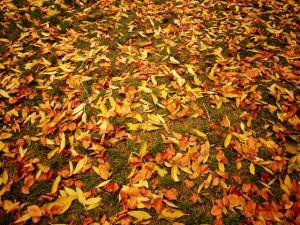 Herbstlaub suchen. Wo ist hier das Ahornblatt versteckt? Foto (c) kinderoutdoor.de