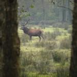 Wann sehen Kinder schon einen solchen prächtigen Hirschen? Ausser im Wildpark Eekholt.  foto (c) kinderoutdoor.de