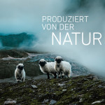 Swisswool: Die Alternative zur Daune?
