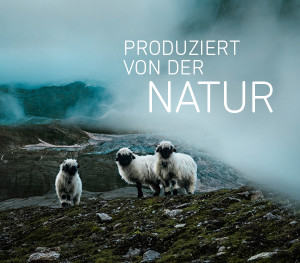 Swisswool: Ortovox setzt auf die Wolle der Scahfe aus dem Schweizer Hochgebirge. JaWOLL! Foto (c) ortovox / Swisswool