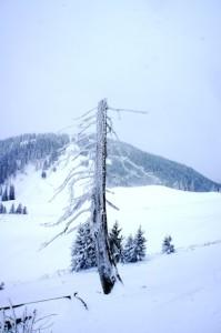 Selbstversorgerhütten im Winter und Ihr seid der Natur mit den Kindern ganz nah.  Foto (c) kinderoutdoor.de