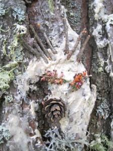 Schnitzeljagd im Wald. Wer bastelst das schönste Baumgesicht? Foto (c) kinderoutdoor.de