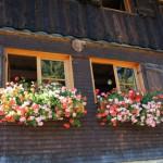 Familienfreundliche Hütten im Allgäu und Kleinwalsertal