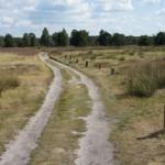 Wanderwege mit Schafe: Jawoll, da wandern Kinder gerne!