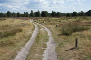223 Kilometer ist der Heidschnuckenweg lang. Mit den Kindern könnt Ihr die eine oder andere Etappe auf den Spuren der Schafe wandern. Foto (c) kinderoutdoor.de
