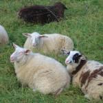 Devold of Norway: Nachhaltig und gut zu den Tieren