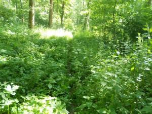 Schnitzeljagd im Wald: Immer schön die Fährte finden.  foto (c) kinderoutdoor.de