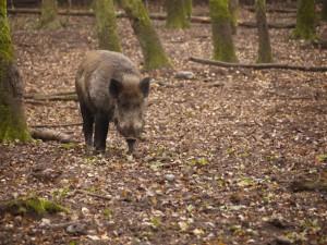 Schnitzeljagd, aber keine Wildschwein Schnitzel bitte! Foto (c) kinderoutdoor.de