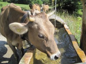 Beim Geocaching rund um Nesselwang macht Ihr auch tierische Bekanntschaften.  foto (c) kinderoutdoor.de