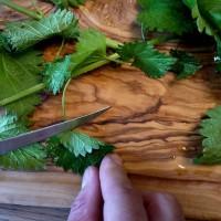 Frisch auf den Tisch: Brennesseln passen gut in die Outdoor Küche.   foto (c) kinderoutdoor.de