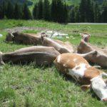 Familienurlaub an der Zugspitze: Bergabenteuer am Dach von Deutschland