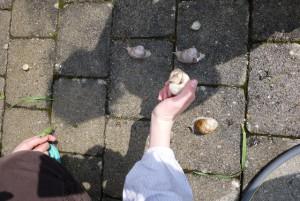 Schnitzeljagd auf höchstem Tempo: Welche Schnecke kriecht als erstes über die Ziellinie.  foto (c) kinderoutdoor.de