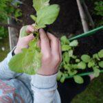 Gärtnern mit Kindern: Was kann die grüne Box von Stadt Land Blüht?