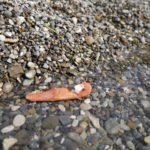 Schnitzen lernen: Anleitung für einen putzigen Seeotter der schwimmt