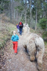 Kinder wandern in der Wildschönau mit den gutmütigen Lamas. foto (c) kinderoutdoor.de