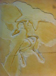 Kinder suchen Fossilien, ob sie allerdings einen solchen Flugsaurier finden ist eher weniger wahrscheinlich.  foto (c) kinderoutdoor.de