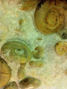 Fossilien klopfen: Ein toller Fund. Wer solche Versteinerungen haben will, der muss raus gehen und selbst danach klopfen.  foto (c) kinderoutdoor.de
