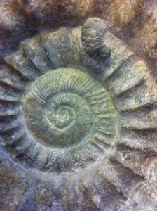 Fossilien suchen mit KIndern: Das ist ein richtiges Outdoor-Abenteuer.  foto (c) kinderoutdoor.de