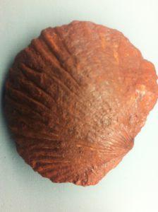 fossilien klopfen fränkische schweiz