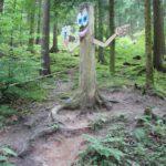 Wandern mit Kindern: Walderlebniswege führen durch die grüne Lunge