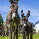 Wandern mit Kindern in Winterberg: Einfach dem Esel folgen!