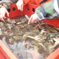 Bei der Kutterfahrt bekommen die Kinder den Fang zu sehen: Was sich alles in der Nordsee tummelt!  Foto (c) kinderoutdoor.de