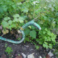 Hier windet sich unser geschnitzter Drache durch das Blumenbeet.   foto (c) kinderoutdoor.de