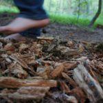 Barfußpfade mit Kinder gehen: Völlig aus den Socken