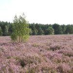 Wandern in  der Lüneburger Heide mit Kindern: Machandel Erlebnispfad