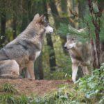 Wandern mit Kindern: Bär, Hirsch und Co. im Tierfreigelände Nationalparkzentrum Lusen
