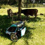 Thule Chariot CX2 im Test: Familienkutsche ohne Abgasprobleme